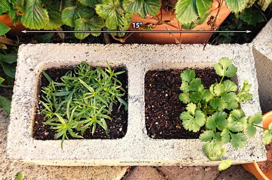 Organics Series Part 1: How To Start An Organic Garden