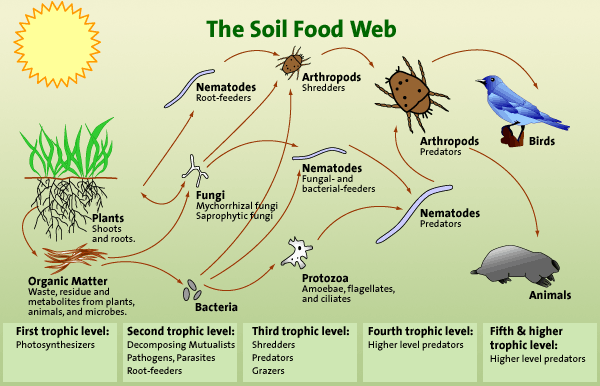 Organics series part 2 the organic soil is alive how for Organic soil definition