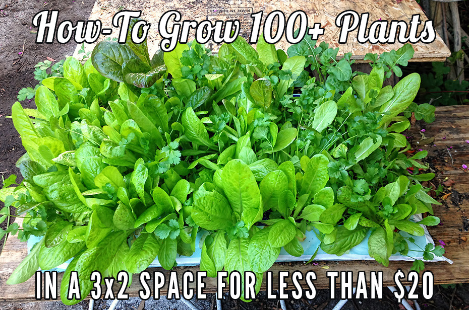 How-To Grow 100+ Plants in a 3x2 Space For Less Than $20