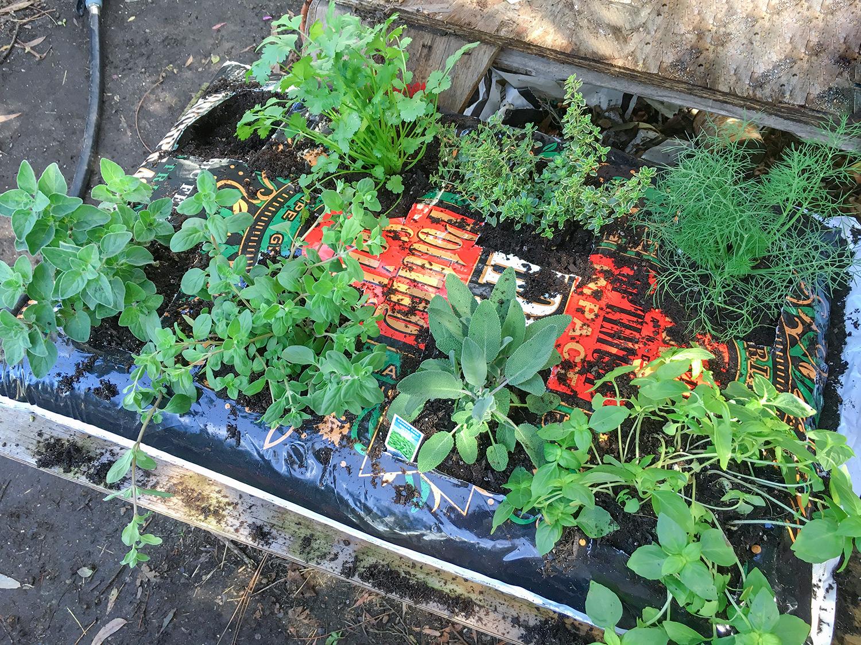 Herb Garden Version